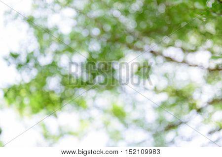 Close up natural blurred bokeh green trees.