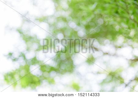 Natural bokeh blurred bokeh ,abstract ,background ,leaf ,nature