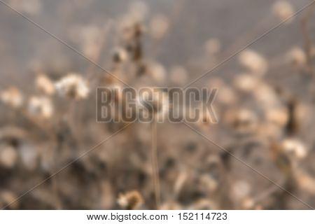 Blur dry leaf set isolated on white backgroud