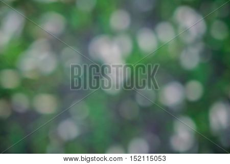Abstract blured green grass  background ,abstract, blured