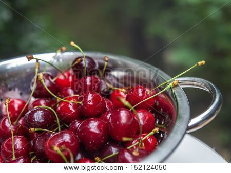 Sweet Fresh Cherries With Water Trops In The Coleander