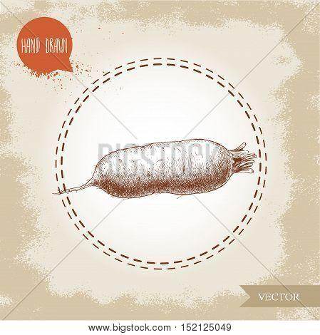 Hand drawn oblong beet root . Sketch vintage vector illustration.