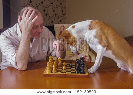 Smart basenji dog desperately thinking about next move in a chess family tournament poster