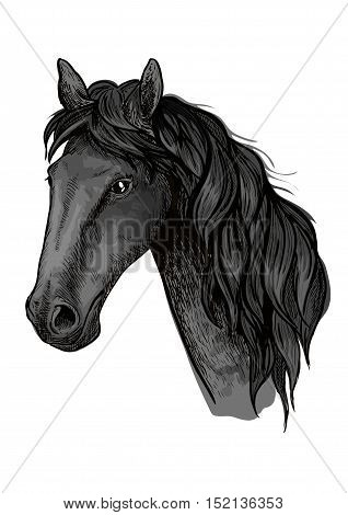 Horse head sketch of arabian stallion. Black racehorse for equestrian sport badge, horse racing symbol or t-shirt print design