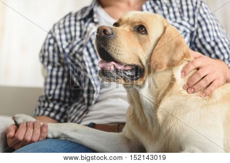 selective focus on happy puppy sitting on a couch with a guy