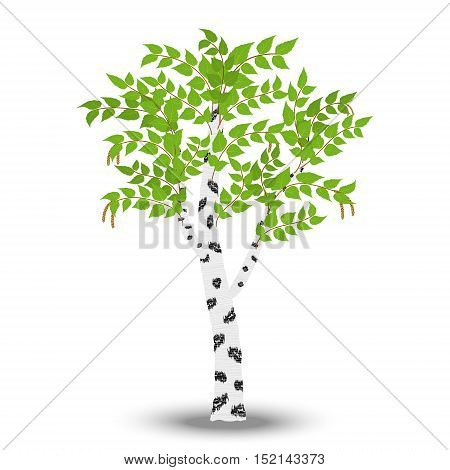birch isolated on white background. Vector illustration.