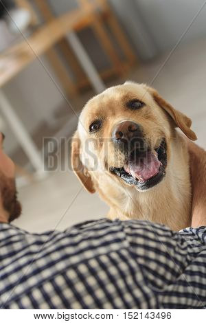 happy dog in hands of a bearded man, close up