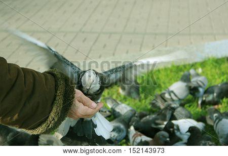 pigeons, feeding pigeons, my grandmother's hand, charity, grandmother feeding pigeons