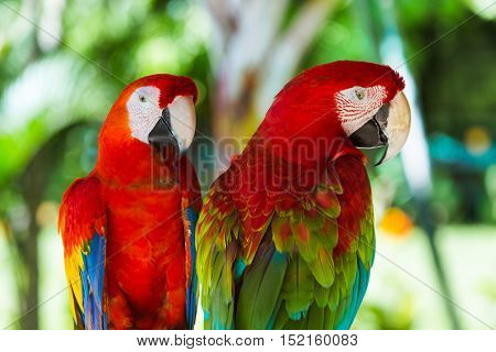 Parrots in Bali Island Indonesia - nature background