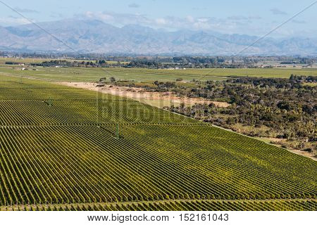 aerial view of rows of grapevine in Marlborough region in New Zealand