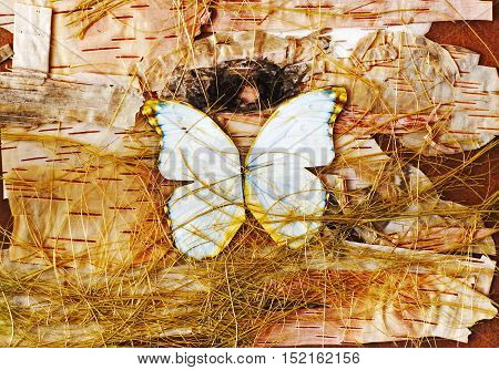 Abstract composition of butterflies, birch bark and straw.