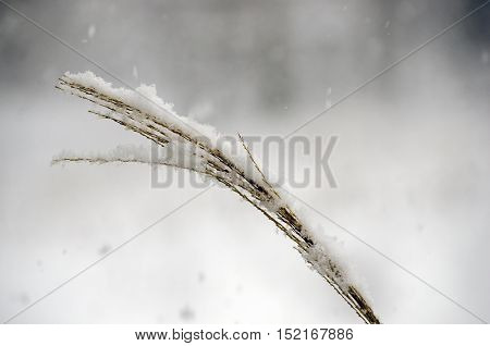 snow flakes falling on brown landscape grass