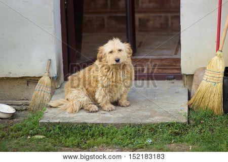 Old House Farm Dog Sitting
