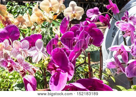 Flowerbed of orchids at Yerba Buena Gardens in San Francisco, California