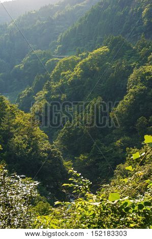 Forest in Japanese mountains on sunset. Mountains covered with trees. Rural countryside landscape. Honshu Kanagawa prefecture Japan