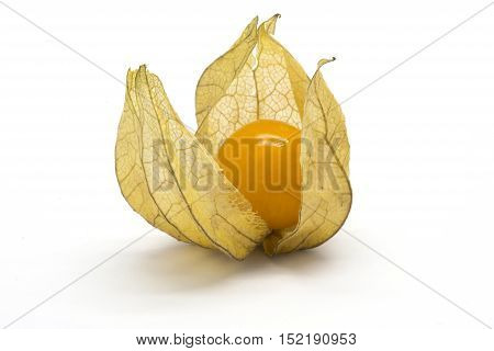 One physalis fruit (Physalis peruviana) on white isolated background