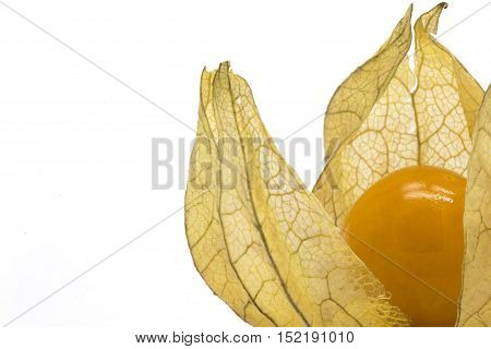 Close-up of one physalis fruit (Physalis peruviana) on white isolated background