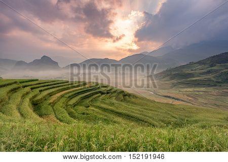 Rice fields on terraced of Mu cang chaiYenBai Vietnam. Rice fields prepare the harvest at Northwest Vietnam.