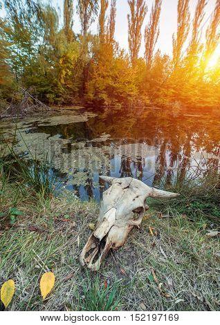 skull of a dead animal in wasteland,