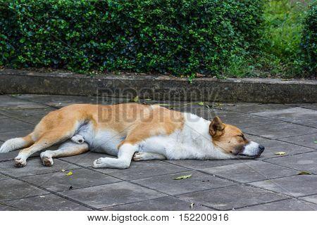 Sleeping Dog on cement floor on nature background