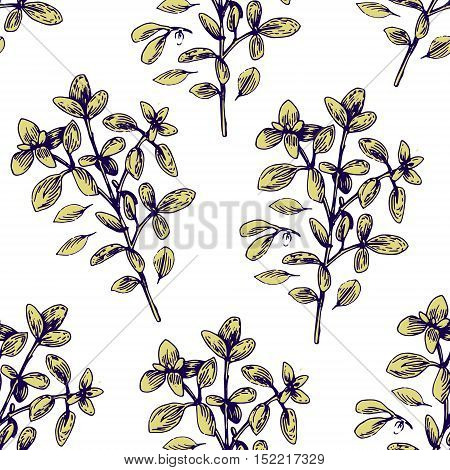 Seamless Vector Pattern With Vector Hand Drawn Oregano Illustration. Vintage Oregano Flower Sketch.