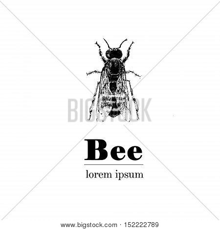 Vector Hand Drawn Illustration Of Bee. Vintage Style.