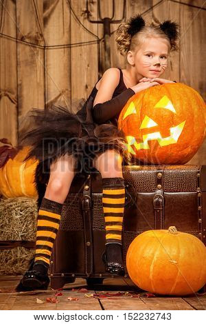 Lovely little girl in a costume of black cat posing with pumpkins in halloween decorations. Halloween party.