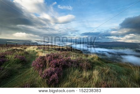 Moorland with Heather Flowers in Morning Mist