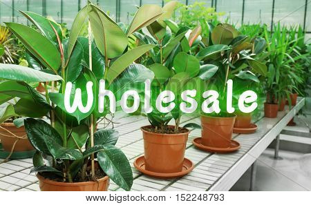 Wholesale concept. Huge greenhouse with lot of flowers and plants for sale