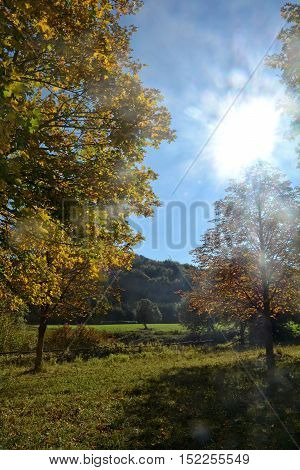 Autumnal landscape with trees, blue sky and bright sun