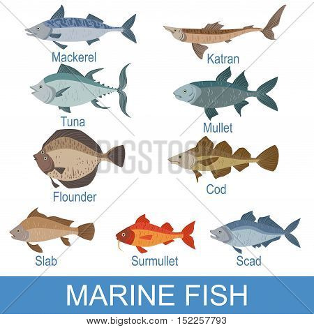 Marine Fish Identification Slate With Names. Realistic Infographic Illustration In Simple Style On White Background.