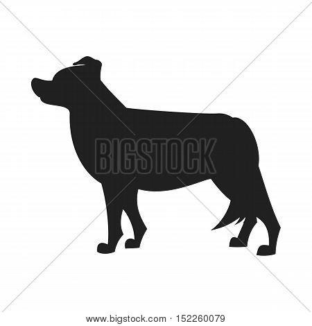 Border collie black silhouette. Obedience dog design, vector flat illustration