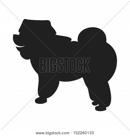 Vintage vector image of a black silhouette of a thoroughbred Chow-chow dog standing straight isolated on white background looking like a shadow of the image.