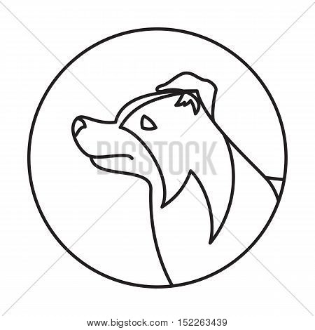 Line collie border head dog in round. Linear puppy pedigree, vector illustration