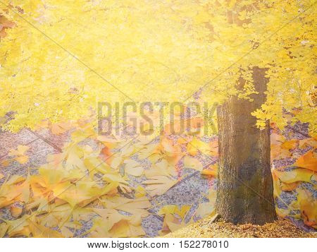 Abstract autumn Ginko tree blur natural background