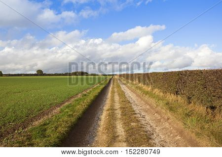 Limestone Bridleway With Wheat And Hedgerow