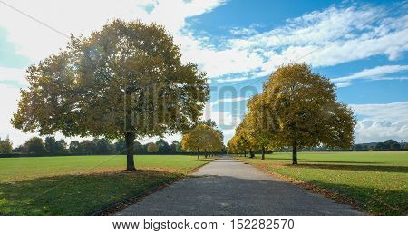 Autumn Avenue of trees in the park in Essex, England