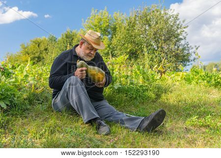 Senior farmer controlling gourd harvest ripeness sitting on the field edge