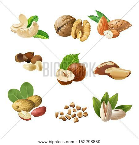 Set of vector icons of nuts - cashews, walnuts, almonds, pine nuts, hazelnuts, brazil nuts peanuts pistachio