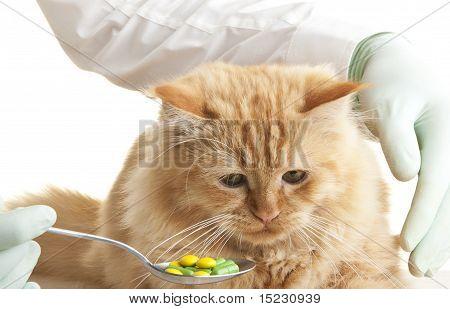 cat veterinary look animal hand pet white poster