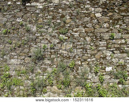 Stone wall with grass, Santiago de Compostela, Spain