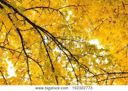 Autumn Fall Season Seasonal Leaves Changing Yellow Background Detail Texture Isolated White Orange G