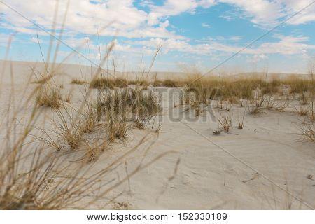 Plant grew in desert, White sand monument