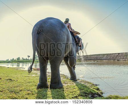 elephant daily bath in Thailand,elephant show in Thailand.
