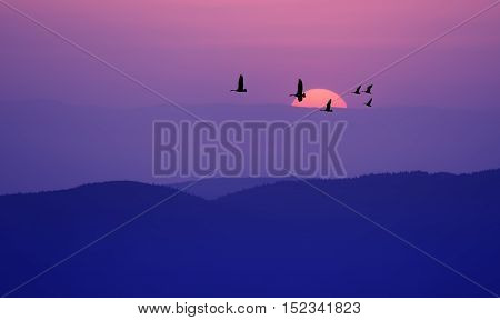 Flock of cranes spring or autumn migration over dark purple landscape