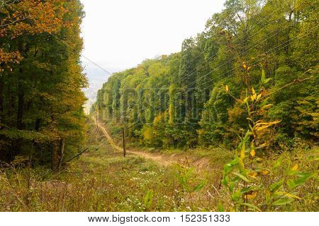 Powerline cut through the trees in Morgan County Tennessee