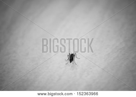 Mosquito On The Floor.