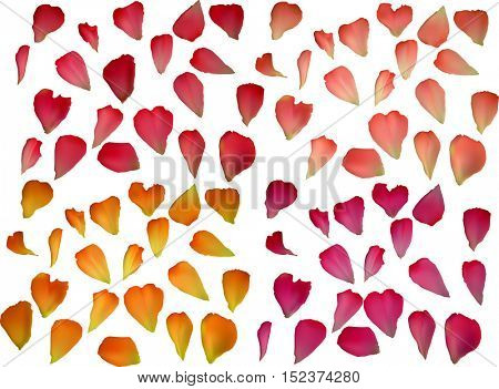 illustration with rose petals isolated on white background