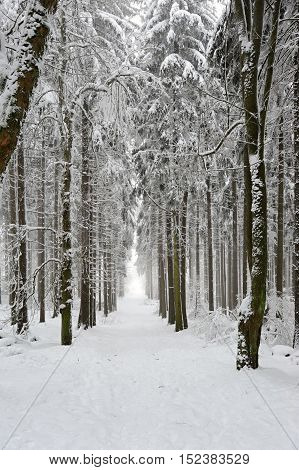 Winter snow - covered forest road in the evening