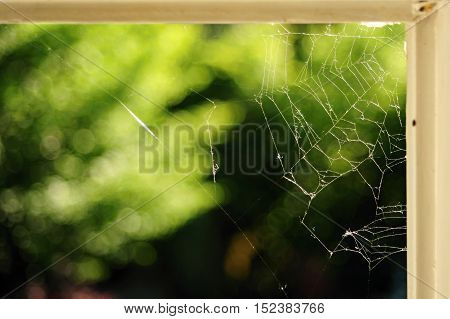Cobweb in the corner of an old white window into the garden